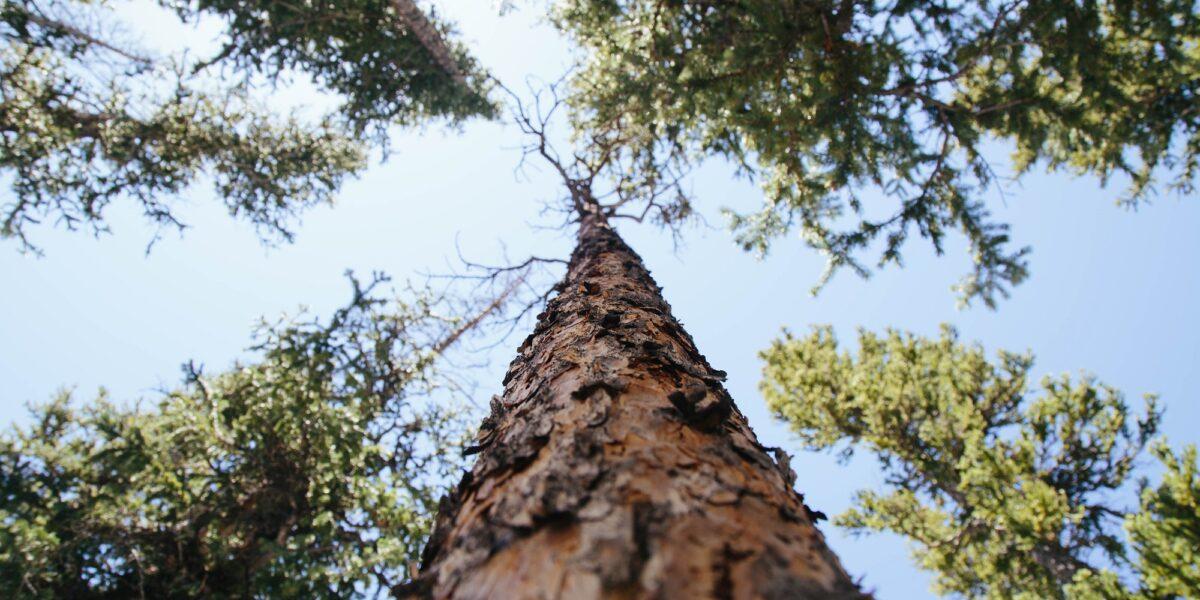 I lineamenti di una scienza della sostenibilità