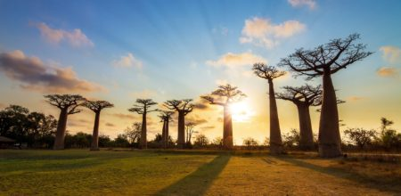 Crisi ecologica e spiritualità. Il contributo dell'Africa
