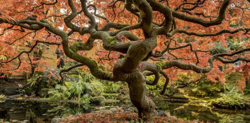 L'albero-mondo
